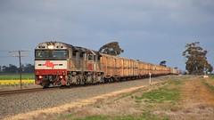 SCT001 SCT014 and SCT011 gather speed on the approach to the Wimmera Hwy crossing (bukk05) Tags: sct001 railpage:class=97 railpage:loco=sct001 rpausctclass rpausctclasssct001 sct014 sct011 sct sctlogistics sctclass specialisedcontainertransport 2018 pm9 world wimmera westernstandardgaugeline wagons explore export engine emd electromotivediesel emd16710g3ces railway railroad railpage rp3 rail railwaystation railwaystations ruralcityofhorsham train tracks tamron tamron16300 trains photograph photo loco locomotive landscape horsepower hp horsham flickr freight diesel dooen station standardgauge sg spring australia artc zoom canon60d canon gt46cace canola victoria vr victorianrailway vline victorianrailways mainline trees vans