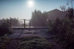 Foggy Morning 2 (Roderick van der Steen) Tags: sonya7s sonyalpha zeissmilvus50mmf14distagon zeiss milvus1450 f80 novoflex fog morning sun haze spiderweb dewdrops