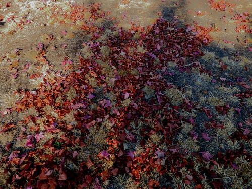 2018-10-17 - Fallen leaves