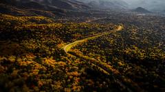 Road (MakiEni777) Tags: road forest season nature drone hokkaido autumn fall
