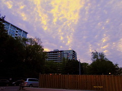 The Sky (ninayak- Busy next few weeks) Tags: north york skies toronto neighbourhood city evening clouds light buildings trees fence the sky streets sunlight day twilight