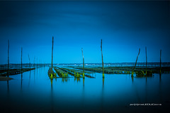 Oyster blues (hyeronimousse) Tags: basson darcachon conche du mimbeau aquitaine france cap ferret bleu blue green vert ciel sky table huitre oyster piquet bois wood nuit night hour heure bleue lignes line nikon d7100 nikkor 1755 f28 hoya filter nd4 filtre neutre 4 long exposure dslr digital mer sea seascape ocean atlantique sable sand algue lightroom