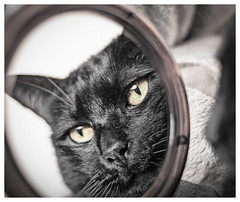 On the Mirror (Pepenera) Tags: cat cats chat gatto gato gatti black macrofriday onthemirror