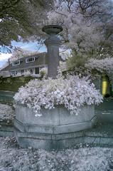Mount Edgecumbe Sept 18 (RightCharlie100) Tags: infraredconverted 720nm mount edgecumbe cornwall flowers plants ir