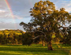 Rainbow, Tungkillo - South Australia (Trace Connolly Photography) Tags: australia natur natura natural nature naturaleza naturephotography colour color colourful outdoor outdoors outside eos canon sunlight exposure flickr landscape earth environment environmental environmentalphotography sunset sunrise contrast red green yellow blue black white scene scenery cloud clouds sky scenic weather holiday view country countryside orange purple pink rainbow roygbiv