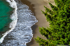 where the ocean meets the forest (Cottage Days) Tags: pacificocean oregoncoasthighway oregon water trees landscape
