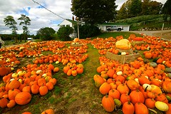 Pumpkin Time In Michigan (Herculeus.) Tags: michigan usa vegetables farm produce pumpkins sonya7rii metabonesnfemountt nikkoraf2485mmf28 outside outdoor outdoors vines grapes hill sky clouds 5photosaday