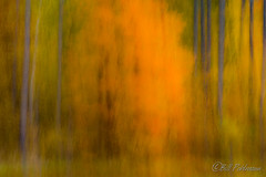 20181007-DSC_0078.jpg (GrandView Virtual, LLC - Bill Pohlmann) Tags: autumn nature intentionalcameramovement blur fallcolors fifieldwi wisconsin abstract chequamegonnationalforest smithrapids icm colorfulleaves