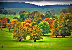 Derbyshire Autumn (Tony Worrall) Tags: autumn autumncolour derbyshire golden seasonal trees natural nature country countryside season beauty chatsworth gardens grounds kept outside outdoors buy sell sale bought stock item open english uk gb british view your tourist visit green greenery landscape shades shapes beautiful ilobsterit instagram grow growing shaped place