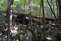 Laying Down and Standing Up (Tonya Salas) Tags: tennessee stateparks outdoors nature rocks trees