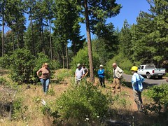 2018. Regional Office, Westside Service Center, and Mt. Hood employees review landscape fuels and forest health treatment work in the Sportsman's Paradise area. Barlow Ranger District, Mt. Hood National Forest, Oregon. (USDA Forest Service) Tags: usda usfs forestservice stateandprivateforestry foresthealthprotection region6 r6 pacificnorthwestregion westsideservicecenter westerninternationalforestdiseaseworkconference 2018 sportsmansparadise servicecenterreview barlowrangerdistrict mthoodnationalforest oregon bethwillhite foresthealth landscape treatment bradgehring debbiehollen shawnabautista whitneyolsker fuelsreduction