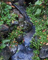 SDQ_0629 (stevemccaffrey) Tags: canada city colorimage colourimage nature nopeople nobody ontario outdoor outdoors toronto sigmasdquattro sigma sigma30mmf14dc fall autumn park parks
