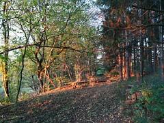 Sonnenaufgang im Wald (shortscale) Tags: sonnenaufgang