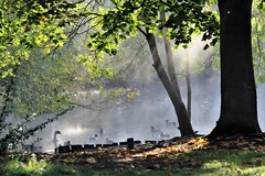 IMG_2116 (lesleydoubleday) Tags: mist fog leicestershire charnwoodwater loughborough