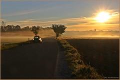 Der Weg zur Arbeit (der bischheimer) Tags: sonnenaufgang sunrise nebel morgennebel morgens strase street lausitz fog mist canon derbischheimer