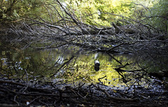 Man vs Nature 2/6 (Harry Goddard) Tags: photography nikon d3200 1855mm reflections man nature vs trees green can made greenery park mud dirty