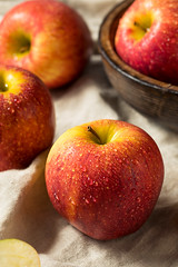 Raw Red Organic Envy Apples (brent.hofacker) Tags: agriculture apple apples autumn background braeburn cider delicious diet edible envy envyapple envyapples food fresh freshness fruit gala green harvest health healthy ingredients juicy natural nature nutrients nutrition organic raw red ripe snack sweet tastes vegetarian vitamin yellow