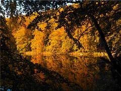 Autumn colors and reflections on the lake Uklei (Ostseetroll) Tags: deu deutschland geo:lat=5418609883 geo:lon=1064788648 geotagged schleswigholstein sielbeck ukleisee herbstfarben herbst spiegelungen autumn colors reflections olympus em5markii