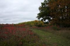 IMG_6334 (sjj62) Tags: fishcreekwi doorcountywi fall autumn woods doorcounty fishcreek 40d