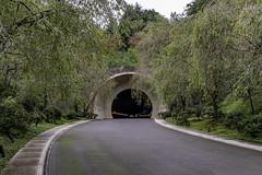 AGQ-20180927-0001 (AGQue) Tags: 2018 asia autumn fall gmt0900tokyostandardtimezone japan koka september shigaprefecture travelphotography museum tunnel vacationing kokashi jp