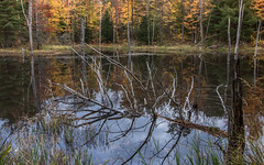 Northern Reflections (Rainfire Photography) Tags: autumn fall colours reflections trees forest lake muskoka nikon d7200