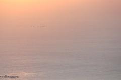 vol du soir (Mireille Muggianu) Tags: aves birds bouchesdurhone cassis europe france oiseaux provencealpescotedazur ciel coucherdesoleil minimal paysage samsungnx nx500