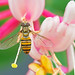 Honeysuckling (mishko2007) Tags: korea 105mmf28 honeysuckle hoverfly