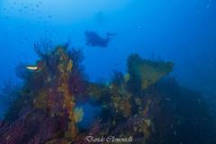 IMG_1426 (davide.clementelli) Tags: diving dive dives padi immersione immersioni ampportofino portofino liguria friends amici underwater underwaterlife sottacqua
