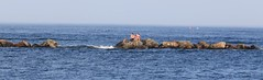 Stranded (shutterglide) Tags: beachgoers beach jetty wave ocean shore seascape tide coastline bikini stranded isolated