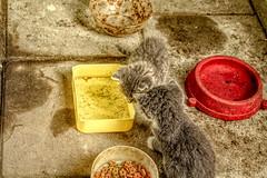 0025 (gill4kleuren - 17 ml views) Tags: pussy puss poes chat mieze katje gato gata gatto cat pet animal kitty kat pussycat poezen
