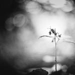 In the spotlight - black & white thumbnail