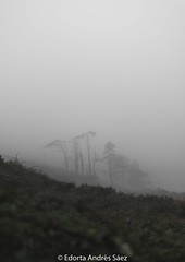 Between mist (Edorta_AS) Tags: nikon spain españa cantabria grey green mountain montaña arboles tree mist fog nature