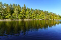(skp-mm) Tags: grün naturephotography wald see wasser himmel baum holz