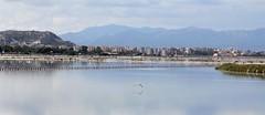 Cagliari (CarloAlessioCozzolino) Tags: cagliari sardegna sardinia saline saltworks gabbiano seagull uccello bird riflesso reflection