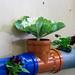 Gemüse und Pflanzen gepflanzt in Abwasserohren aus Plastik