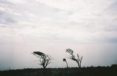 Trees, mist, sea (knautia) Tags: breandown brean somerset england uk october 2018 film ishootfilm olympus xa2 olympusxa2 kodak ektar 100iso nxa2roll81 daytrip seaside footpath nationaltrust sea bristolchannel tree mist misty myfavouritefromtheroll