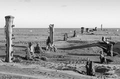 SPURN HEAD BEACH & SKY DEFENCES, E YORKSHIRE_DSC_2516_LR_2.5-2 (Roger Perriss) Tags: kilnsea spurn d750 beach spurnhead spurnpoint posts sea seadefences weathering rocks sky shadows bluesky blackandwhite monochrome