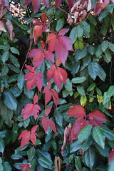DSC_1880 (PeaTJay) Tags: nikond750 reading lowerearley berkshire gardens outdoors nature flora fauna plants flowers trees shrubs bushes foliage