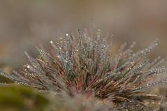 _IGP6336 (andrzejreschke) Tags: insects reptiles plants grass nature butterfly lizard moss flowers beauty beautyofnature