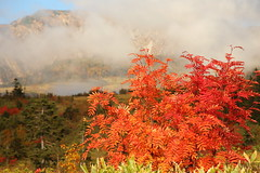 Autumn (Teruhide Tomori) Tags: landscape nature mountain japan japon tateyama toyama 中部山岳国立公園 立山 富山 日本 北陸 自然 風景 立山黒部アルペンルート 弥陀ヶ原 秋 autumn tree forest midagahara highland chubusangakunationalpark japaneserowan ナナカマド tateyamakurobealpineroute