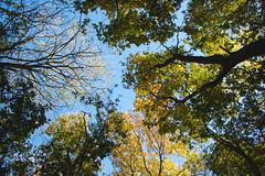Autumn Sky (oandrews) Tags: autumn canon canon70d canonuk colours leaves nature naturereserve northamptonshire outdoors shortandsouthwickwoods shortwoodandsouthwickwood sky sun sunlight trees wildlifetrusts wildlifebcn wood woodland woods peterborough england unitedkingdom gb