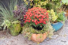 Flowers in Pots (Ladew Topiary Gardens, Monkton, Maryland) (Jersey Camera) Tags: ladewtopiarygardens maryland flowers topiarygardens publicgardens