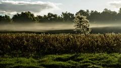 Danube Delta (egyugrasatavasz) Tags: nature danubedelta fall