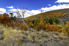 Fall is here (jde95tln) Tags: eastern sierras fall colors colorful color leaves trees grass clouds