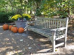 Wheaton, IL, Cantigny Park, Bench, Planter, and Pumpkins (Mary Warren 11.3+ Million Views) Tags: wheatonil cantignypark nature flora plants leaves foliage fall park garden wood bench planter pumpkins