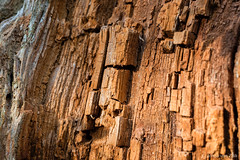 Structure of a dead tree (© Jenco van Zalk) Tags: tree structure dead rings blocks macro closeup small parts part