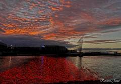 Remember them (Karolina Jantas) Tags: remember them poppies red salford quays manchester water bridge war museum remembrance day panasonic g6 itv studio city media