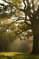 Morning in the park (smir_001) Tags: october autumn garden botanical park victoria bath plants england british canoneos7d royalvictoriapark botanicalgardens flora leaves colours bathnes somerset uk fall landscape outdoor nature spectacular oaktree sunrays misty foggy