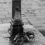 Venice - Water