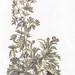 Blooming thistles by Johan Teyler (1648-1709). Original from the Rijks Museum. Digitally enhanced by rawpixel.